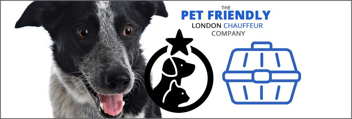 pet-friendly-london-chauffeurs